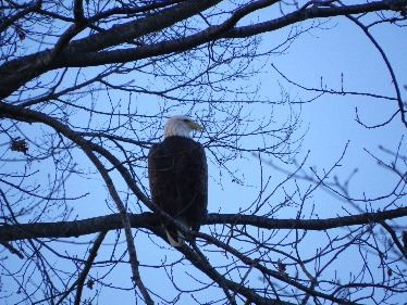 Eagle Coventry Lake
